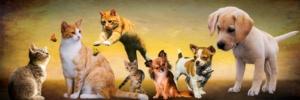 Σκύλοι και γάτες μετά από λήψη CBD έλαιο για ζώα