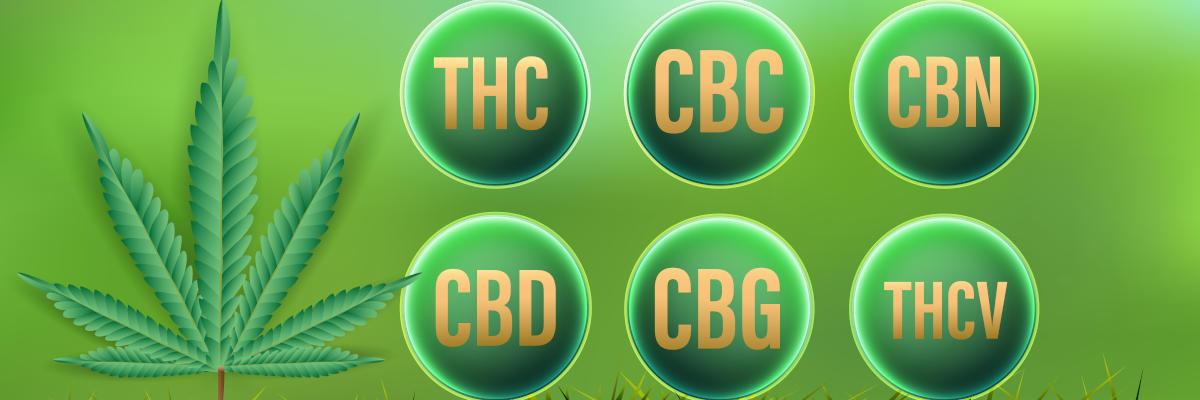 Κανναβινοειδή - Επισκόπηση: CBD, THC, CBC, CBN, CBG, THCV